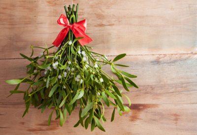 Holiday-plant-pet-hazards
