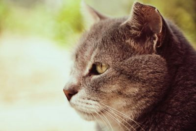 Osteoarthritis-in-dogs-and-cats