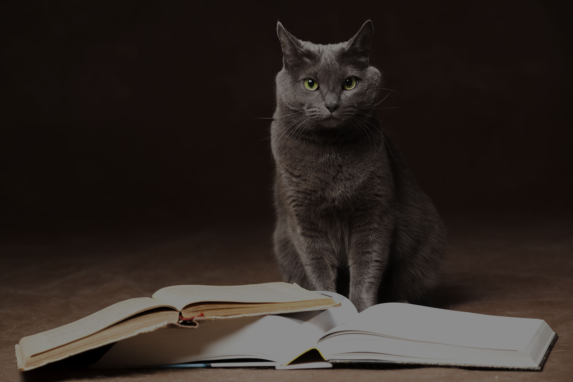Russian Blue Cat sat on the floor with the books in front of her