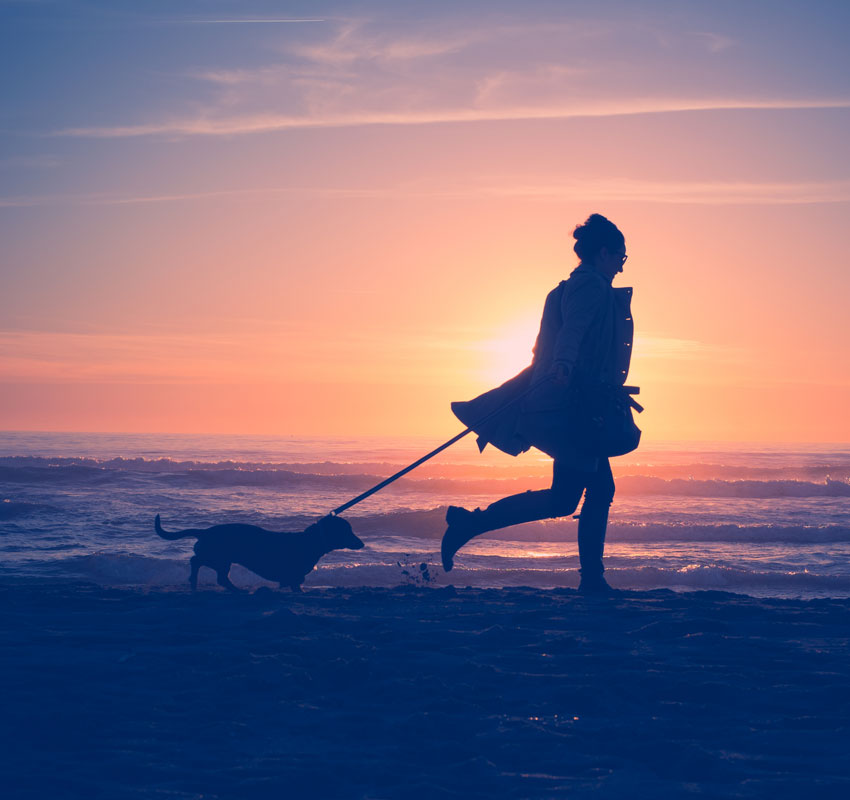 sunsets stroll with dog