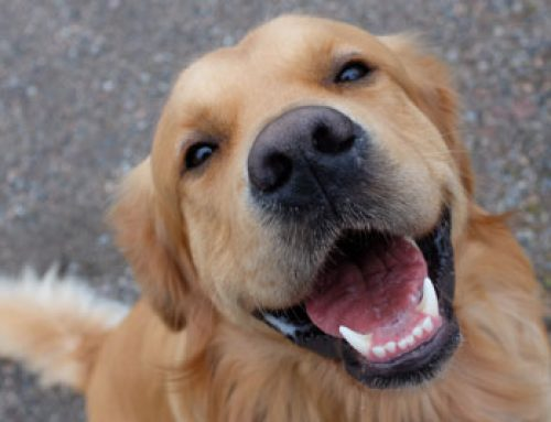 Top 4 Reasons to Get Your Pet's Teeth Cleaned