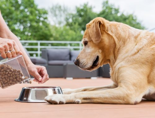 6 Myths About Pet Nutrition