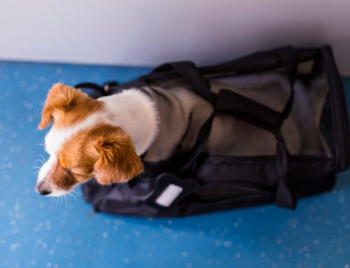 Top 10 Tips for Traveling with Your Pet