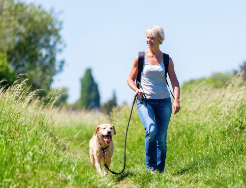 How Dangerous are Fleas and Ticks for Your Pet?