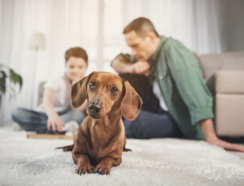 5 Ways to Avoid Pet Emergencies During Quarantine