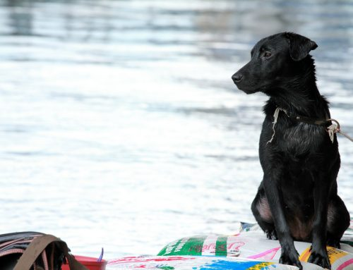 5 Tips on Pet Preparations for a Disaster