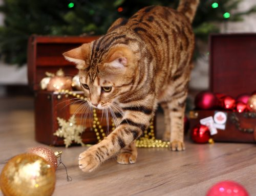 How to Create a Pet-friendly Home this Holiday Season