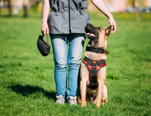 Taking the Mystery Out of Dog Training