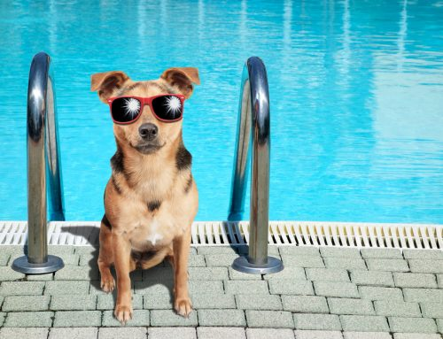 5 Ways to Keep Your Pet Cool During the Dog Days of Summer