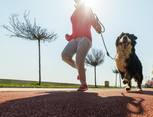 Move it, Move it—Safe Exercise for Pet Weight Loss
